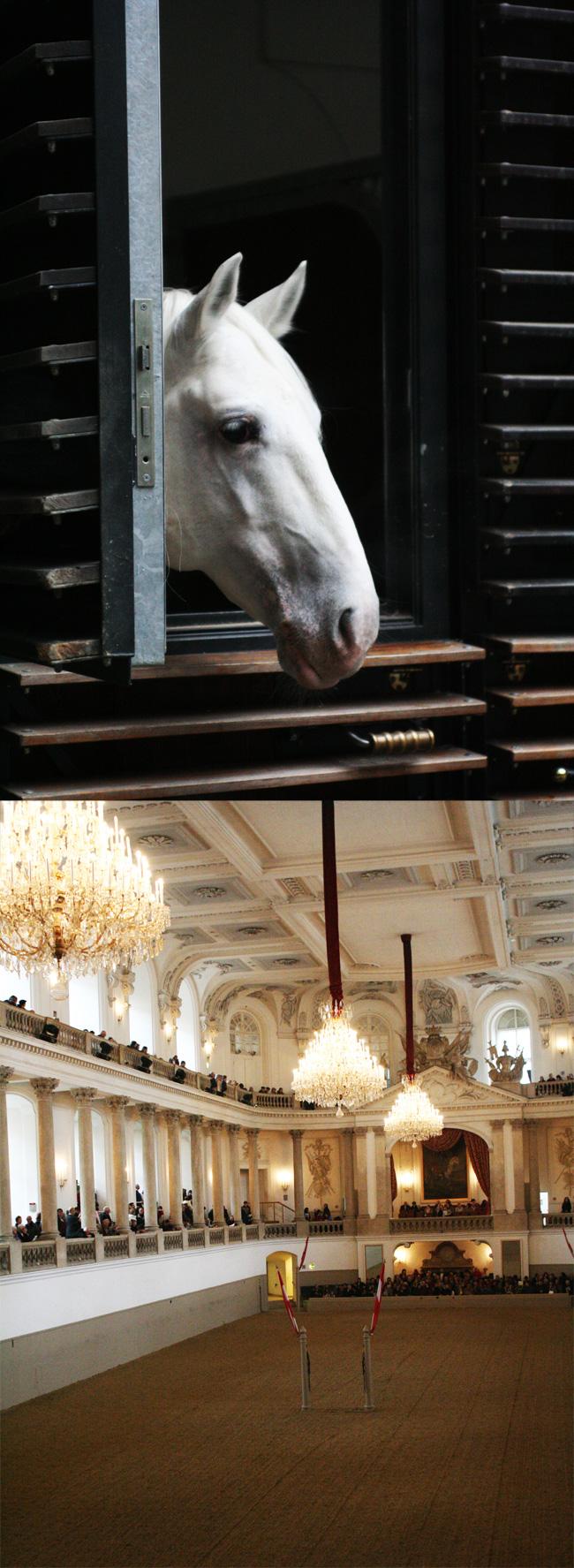 wieden-konie